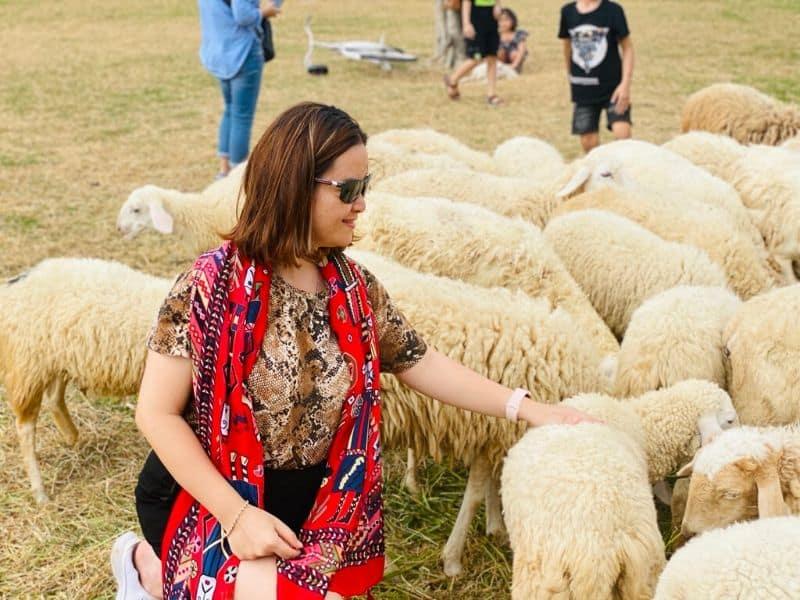 Chơi đùa cũng những chú cừu tại Đồng cừu