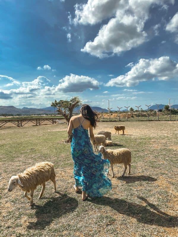 Cừu tại Đồng Cừu Nha Trang