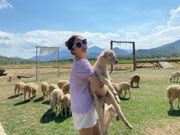 cừu dễ thương tại đồng cừu