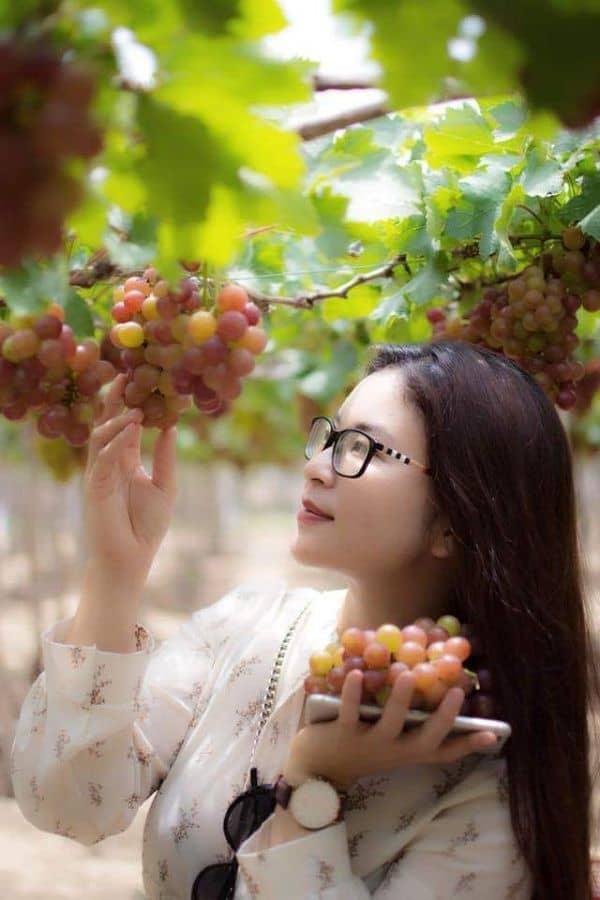 Vườn nho Ninh Thuận